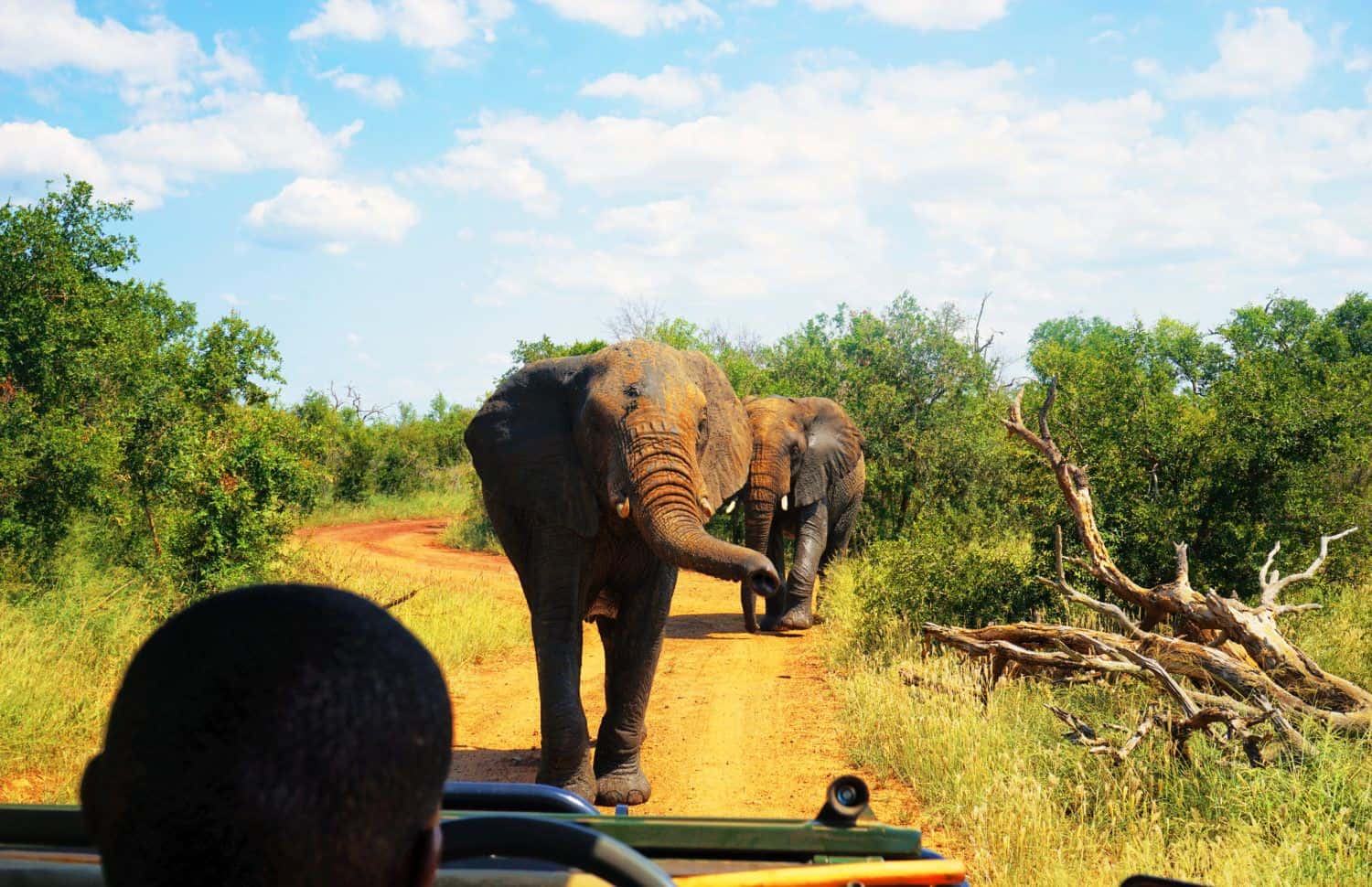 Elephants in Hlane National Park