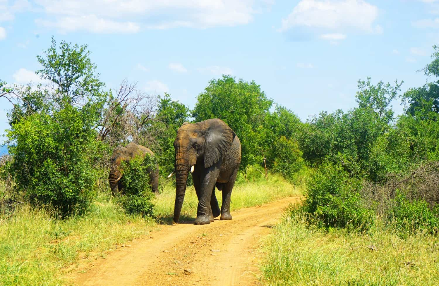 Elephant at Hlane National Park