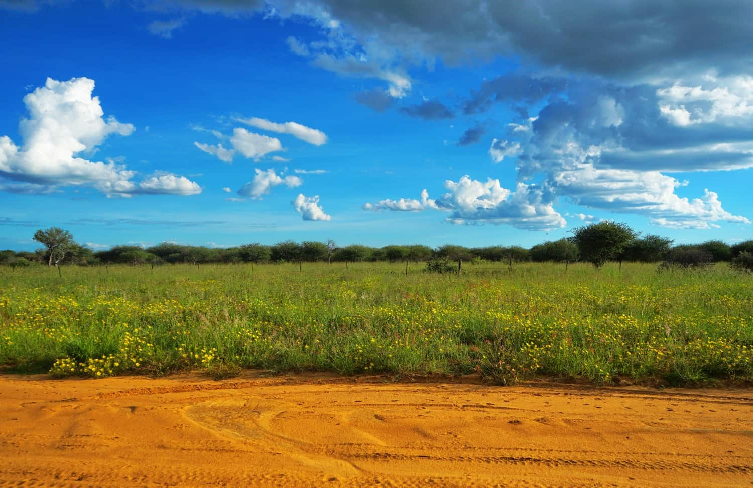 Namibia green countryside