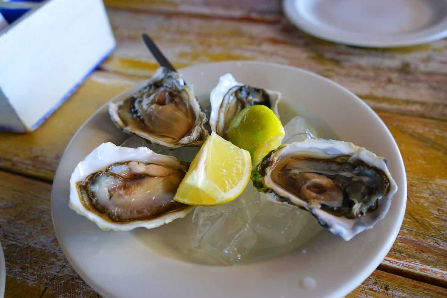 Oysters in Walvis Bay