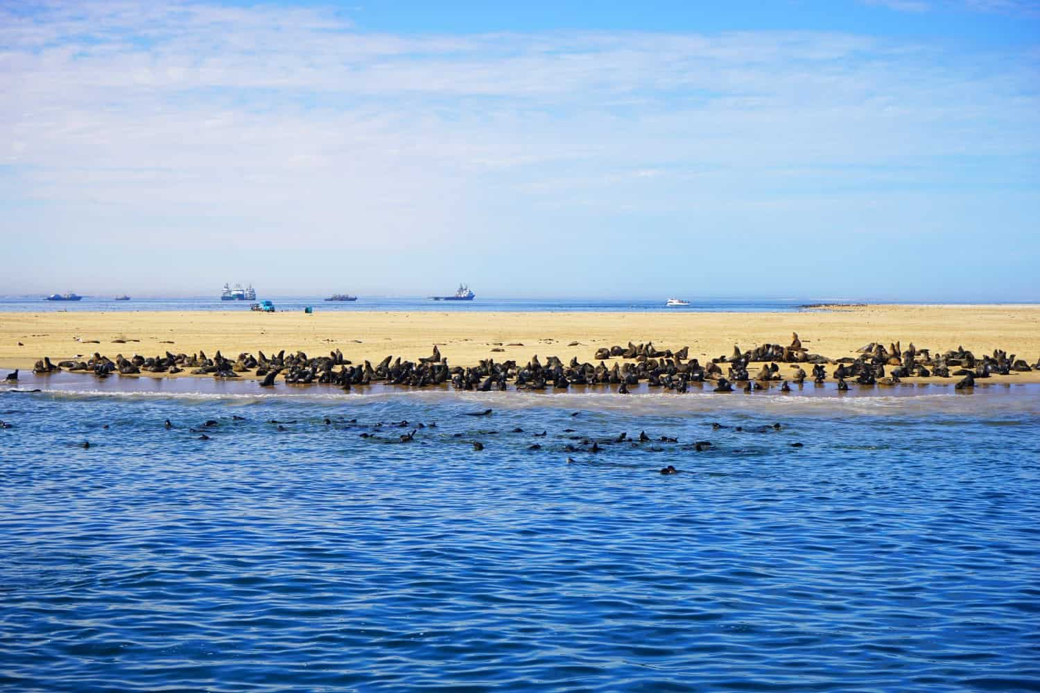 Seals at Walvis Bay in Namibia