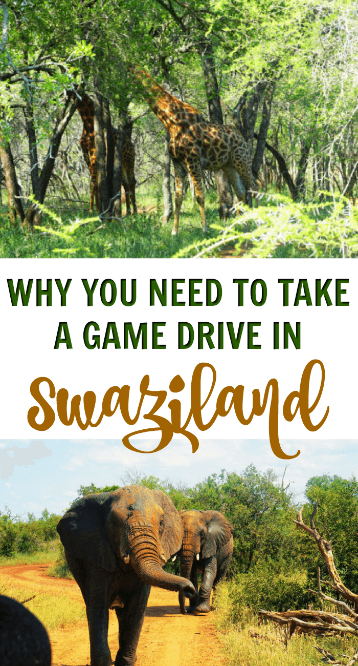 Go to Swaziland! It's a beautiful country full of friendly locals. While you're there, sign up for a game drive in Hlane Royal National Park. It's incredibly inexpensive compared to the cost of drives in its neighbouring countries, and as a bonus, you'll most likely have the entire car to yourself.